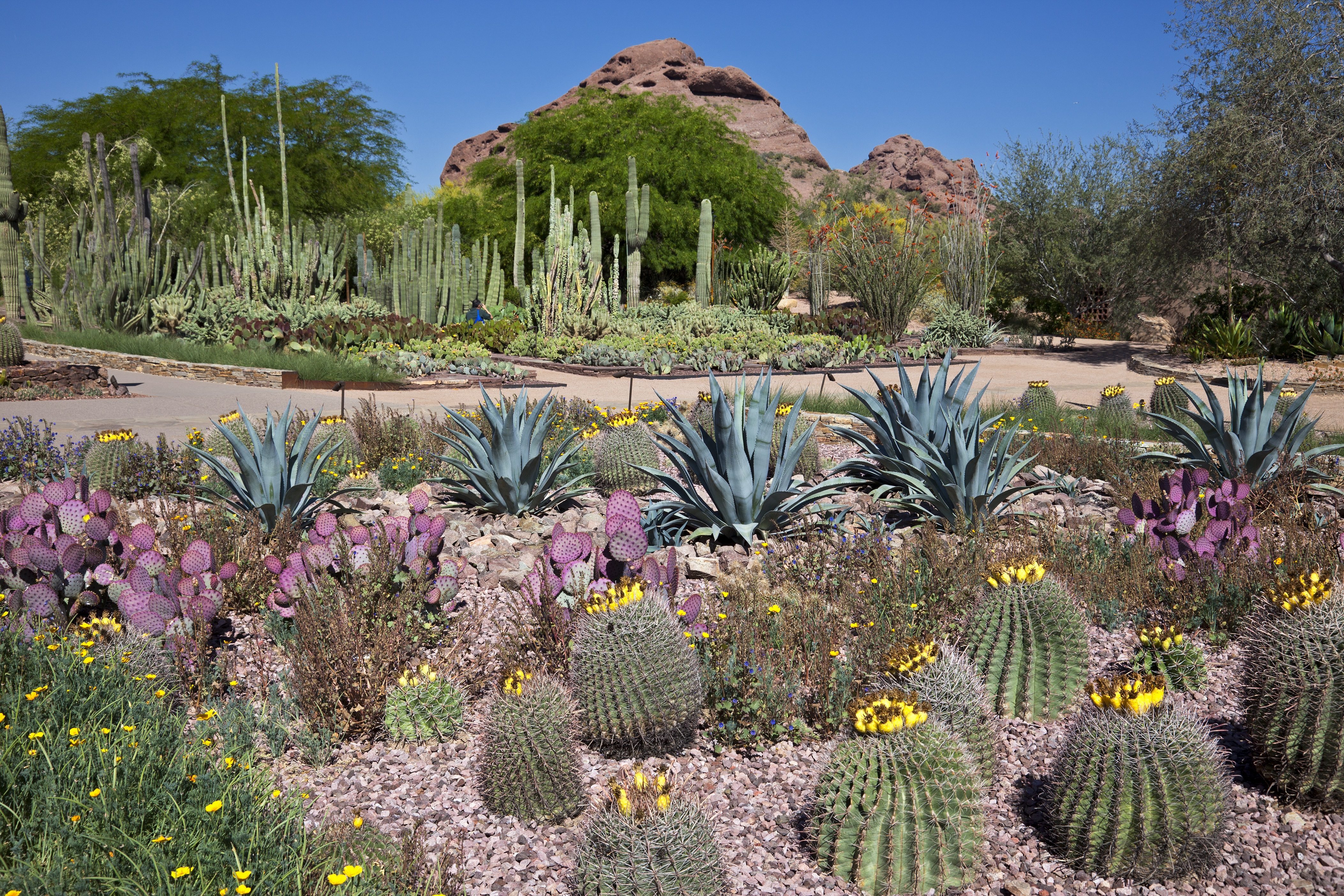 Botanical Gardens in the Southwest United States